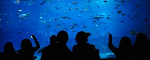 blue-spark-event-design-aquarium